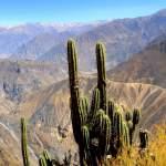 colca-canyon-trekking-oasis-sangalle