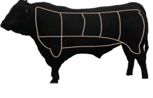 bull_slices