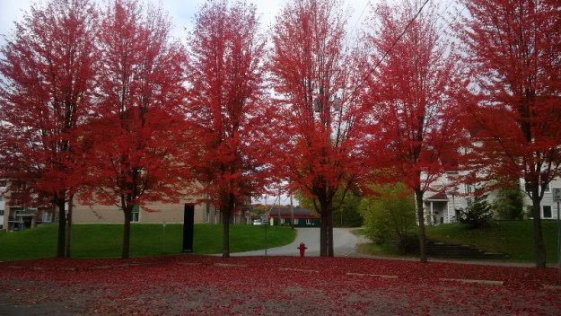 autumn red trees