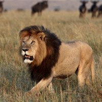 Six Steps to Victory {How to Outsmart the Prowling Lion, the Devil}
