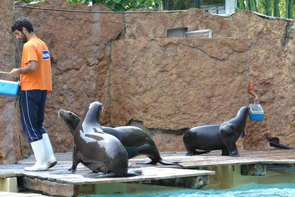 Alimentação dos leões marinhos - Zoo