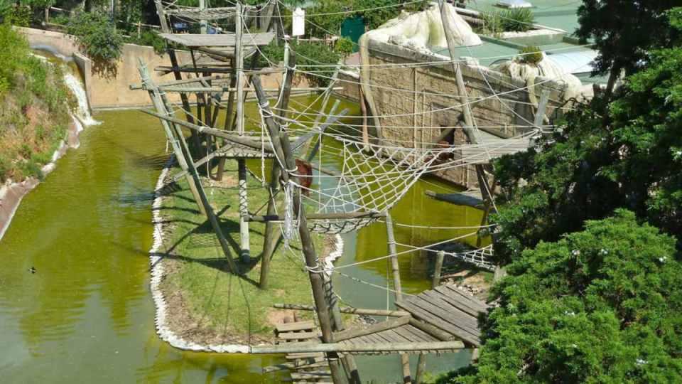 Templo dos Primatas - Zoo