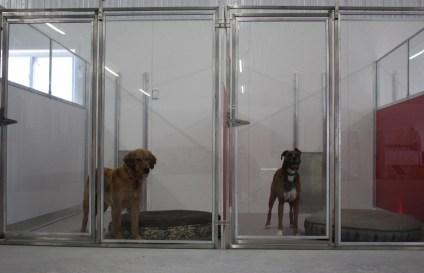 Bozeman Pet Boarding Indoor Kennels