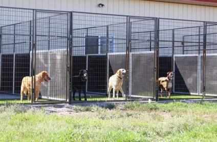 Belgrade Pet Boarding Outdoor Kennels