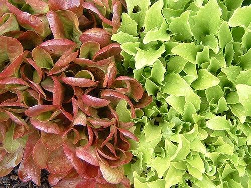 salade-asdfawev