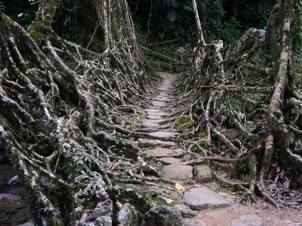 tree-root-bridge