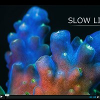 Macro Time Lapse: Great Barrier Reef