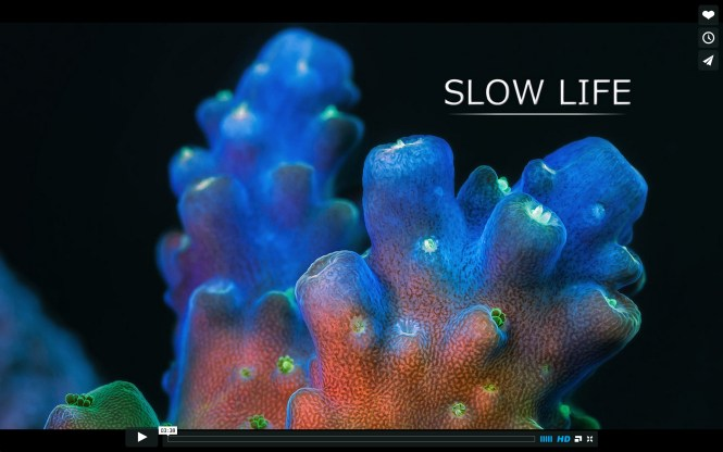slow life title frame Daniel Stupin