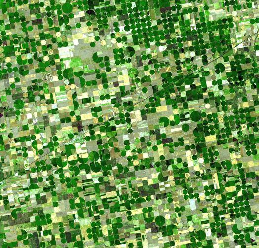 Crops in Kansas