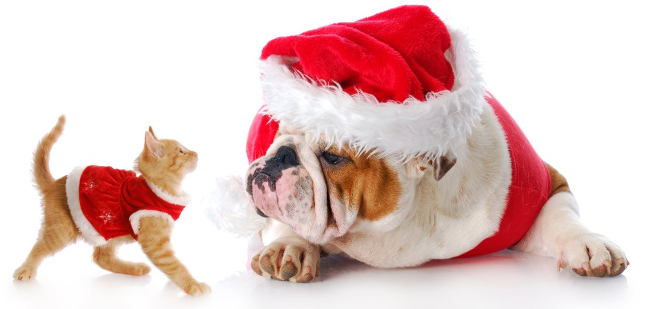 christmas cat and dog