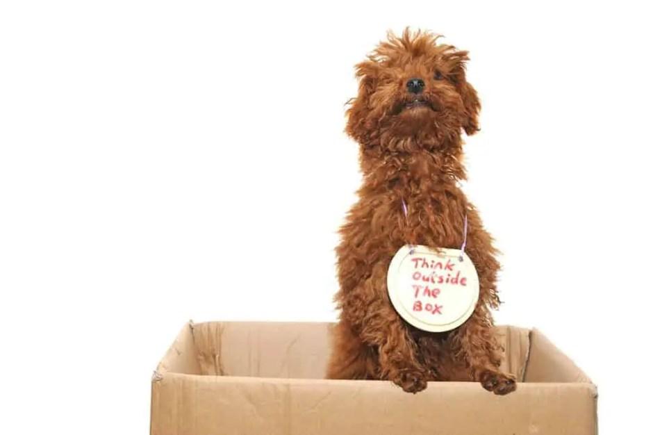 Dog thinking outside the box