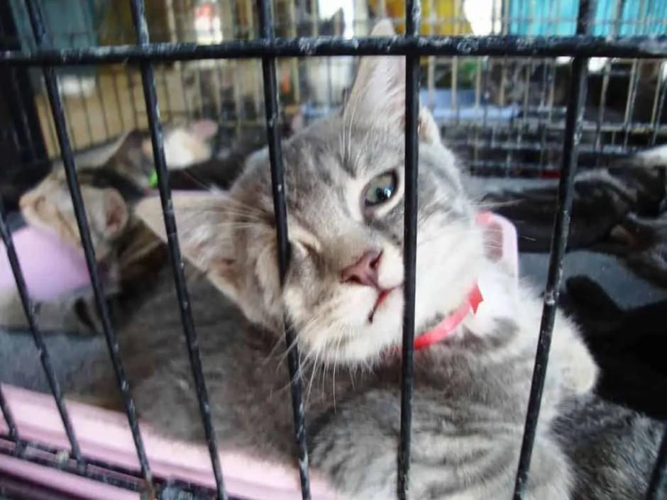 KittenCage