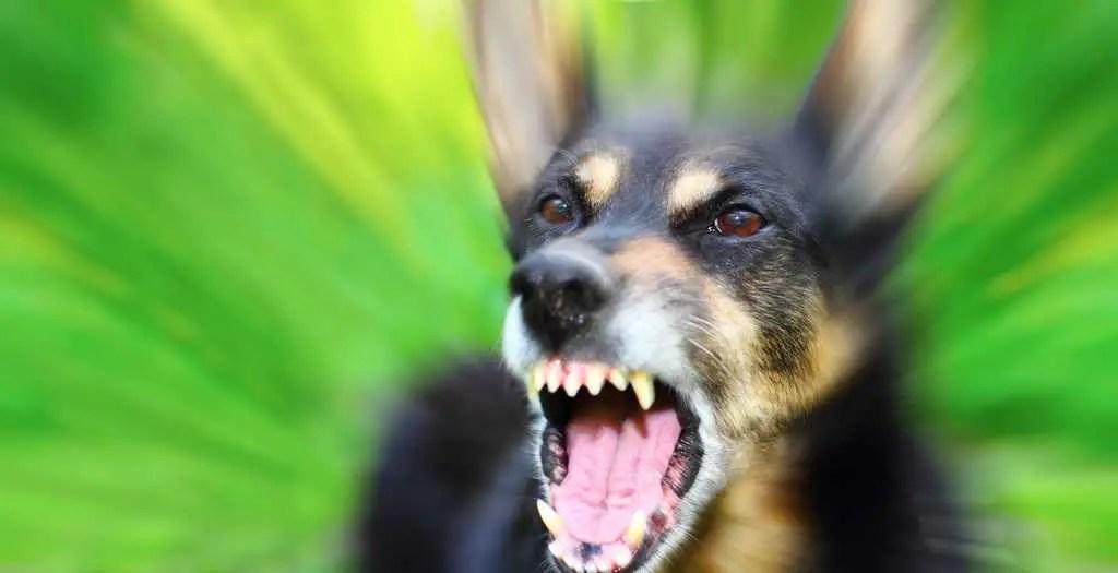 Dog Play Bites Me