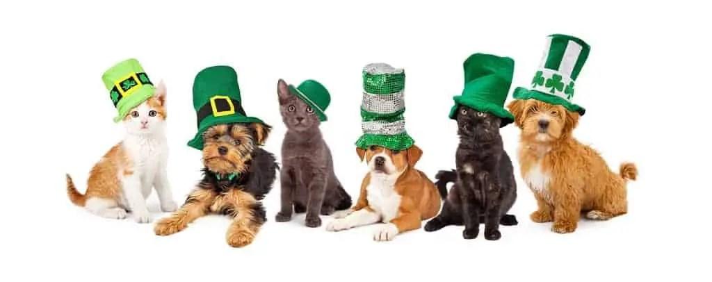 kits pups celebrating paddys day
