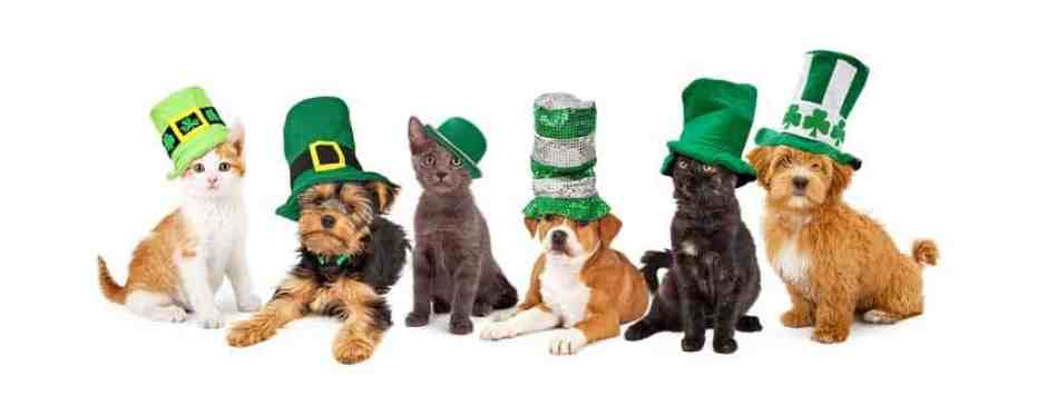 St Patricks Day Puppies and Kittens