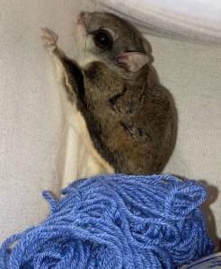 FS yarn (2)