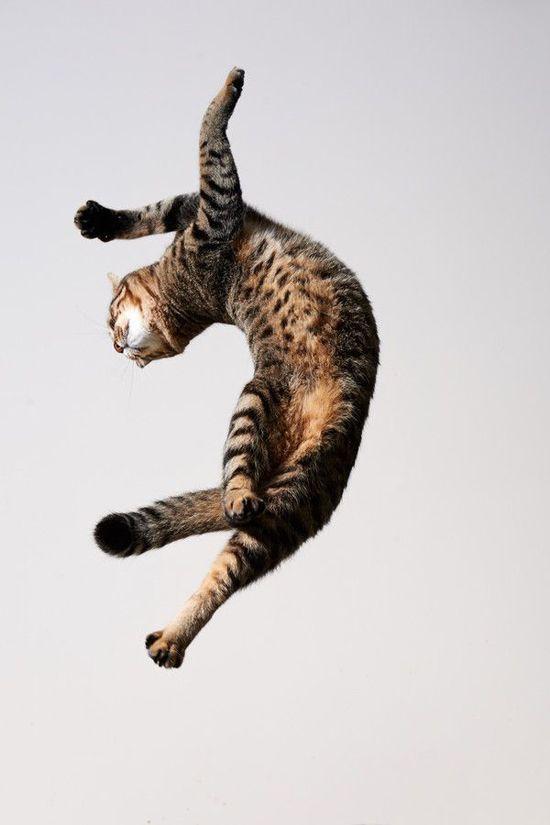 dancing ballerina cat