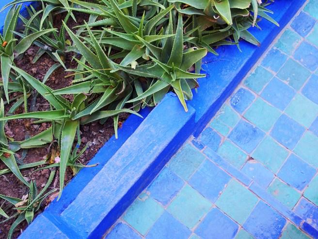 Majorelle Garden - Plants vs Tiles