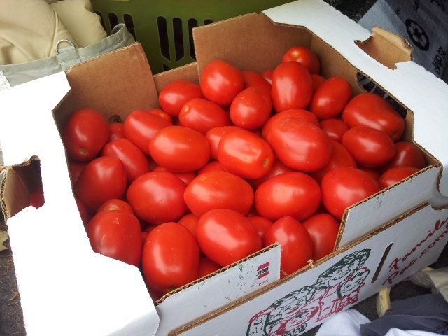 Bushel of Italian paste tomatoes