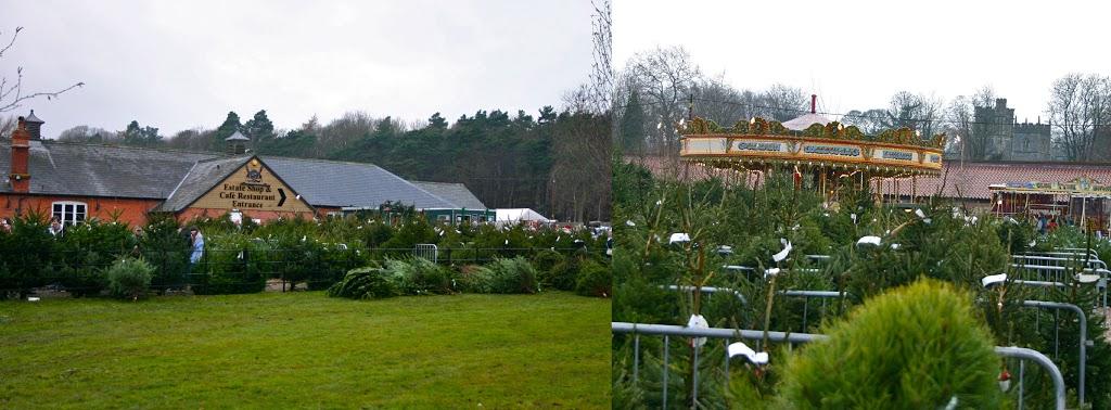 Elveden Christmas Trees