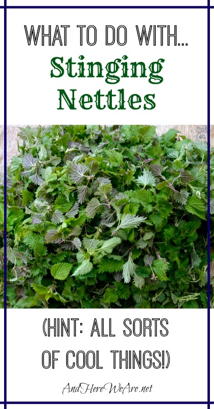 What to do with... Stinging Nettles from And Here We Are...