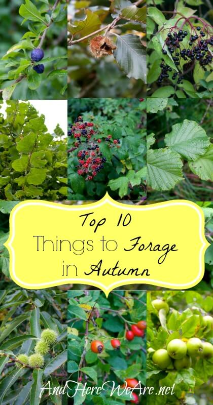 Top 10 Things to Forage in Autumn  And Here We Are...