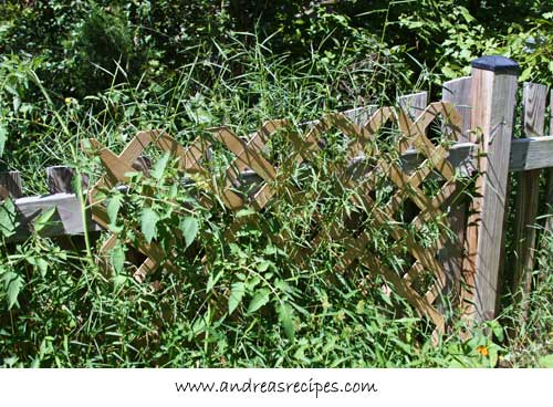 Andrea Meyers - weeds behind the fence, forcing their way through