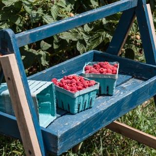 Raspberry Sauce Recipe - Andrea Meyers