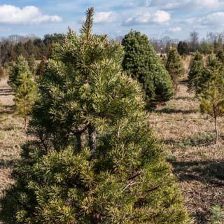 Ticonderoga Farms: Christmas on the Farm - Andrea Meyers