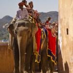 <b>Jaipur - the Amber fort</b>