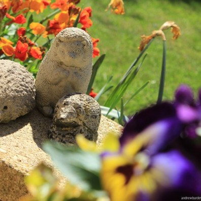 No hedge here! Rather bizarre hedgehog garden ornaments stand in front of dead daffodils.