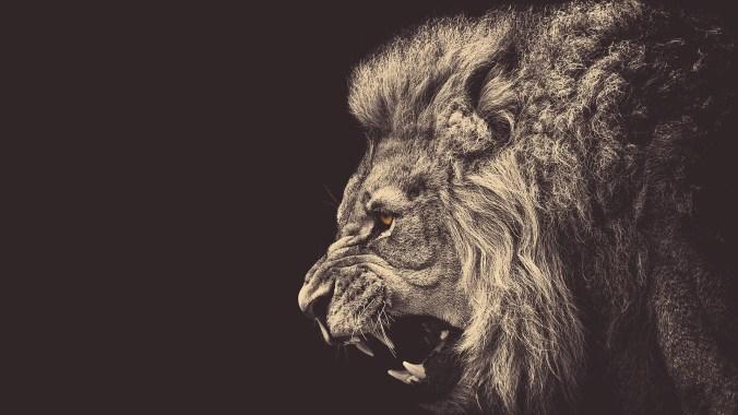 roaring-lion-artistic-hd-wallpaper-1920x1080-3322