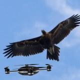 Wie ein Adler eine Drohne attackiert (Video)