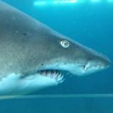 Es sterben mehr Menschen durch Selfies als durch Haiangriffe