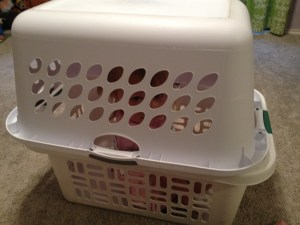It's cheaper than buying your kid a seat...or buying a real dog crate!