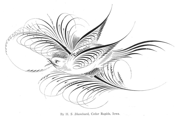 Bird of Pen Flourishes by H. S. Blanchard
