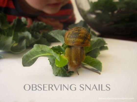 reggio science activities observing snails an everyday story Observing Snails
