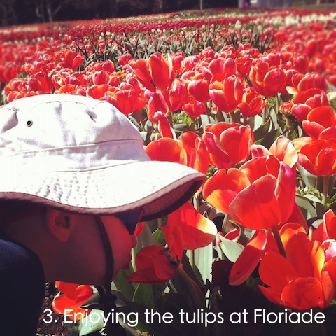 floriade flower festival an everyday story This Week… 6/52