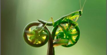 bug on bike