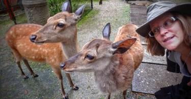 deer adventures in japan