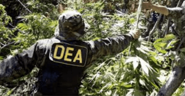 dea rescheduling medical cannabis legalizing medical cannabis anewdomain