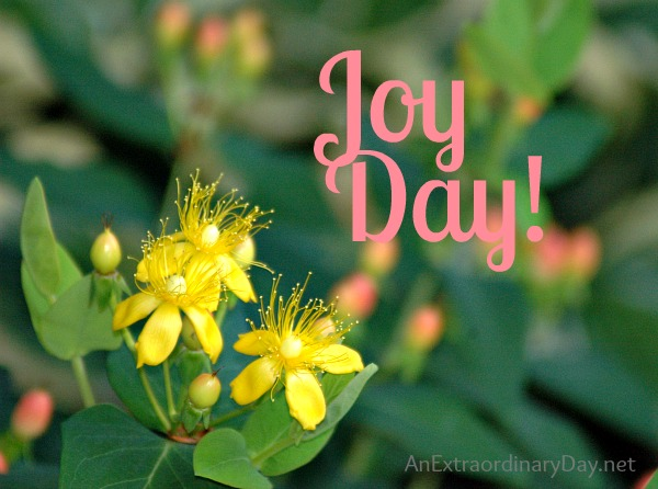 Joy Day! :: Endurance :: Counting Gifts :: AnExtraordinaryDay.net