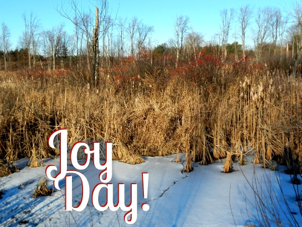 Cattails :: A Gift of Necessity  :: Joy Day! :: AnExtraordinaryDay.net