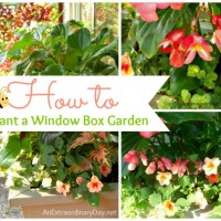 How to Plant a Window Box or Container | Project Inspire{d} Link Party Week 63 and Features