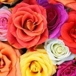 Подписка на цветы Делюкс
