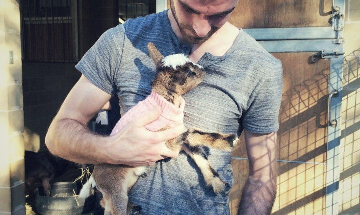 I met a tiny goat in a tiny sweater