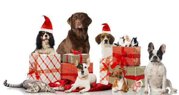 pets-christmas