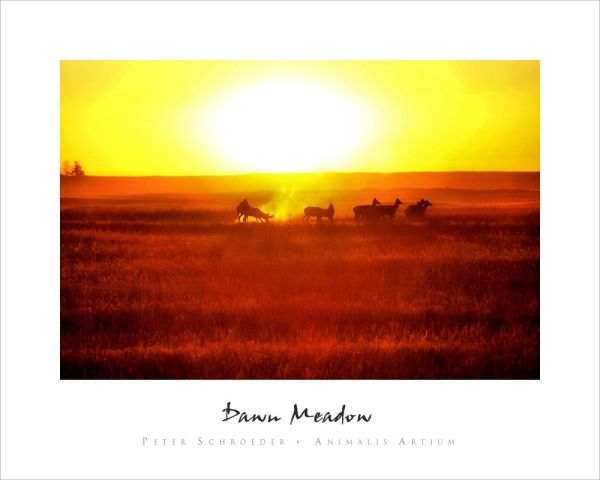 Dawn Meadow - Peter Schroeder - Animalis Artium