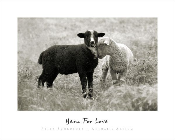 Yarn For Love - Peter Schroeder - Animalis Artium