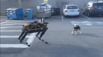 Реакція собаки на робота